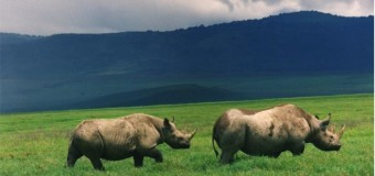Rhino poachers in custody