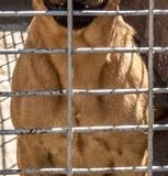 Alberton SPCA Looking For A Home